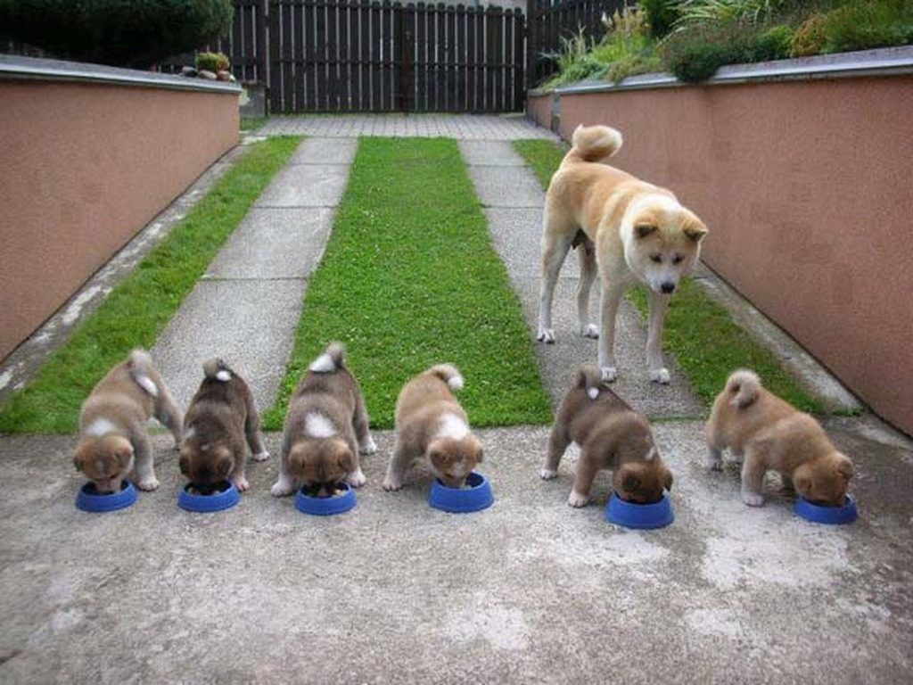 huấn luyện chó cỏ