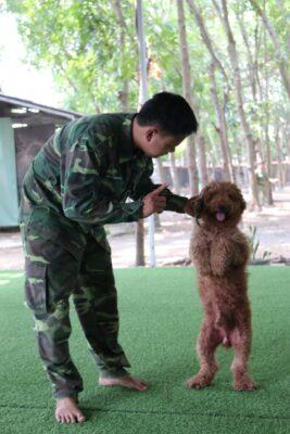 Cách để chọn trường huấn luyện chó Hóc Môn ưng ý