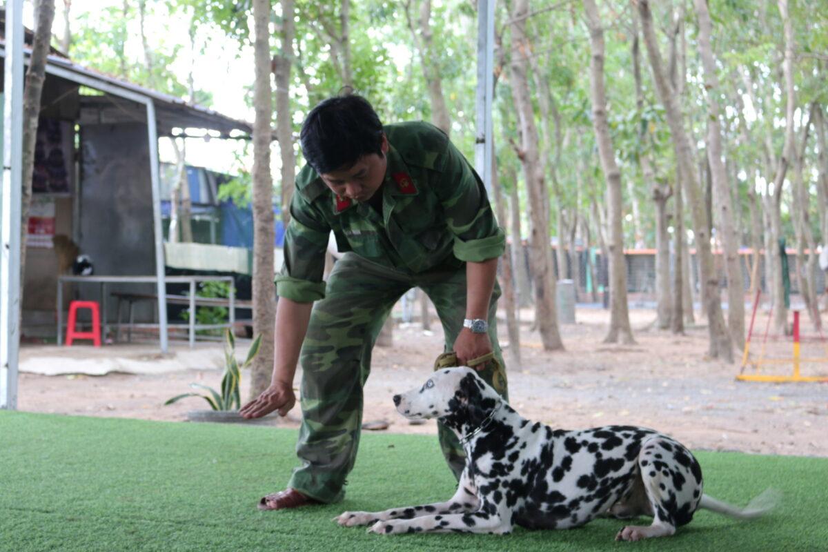 huấn luyện chó đốm
