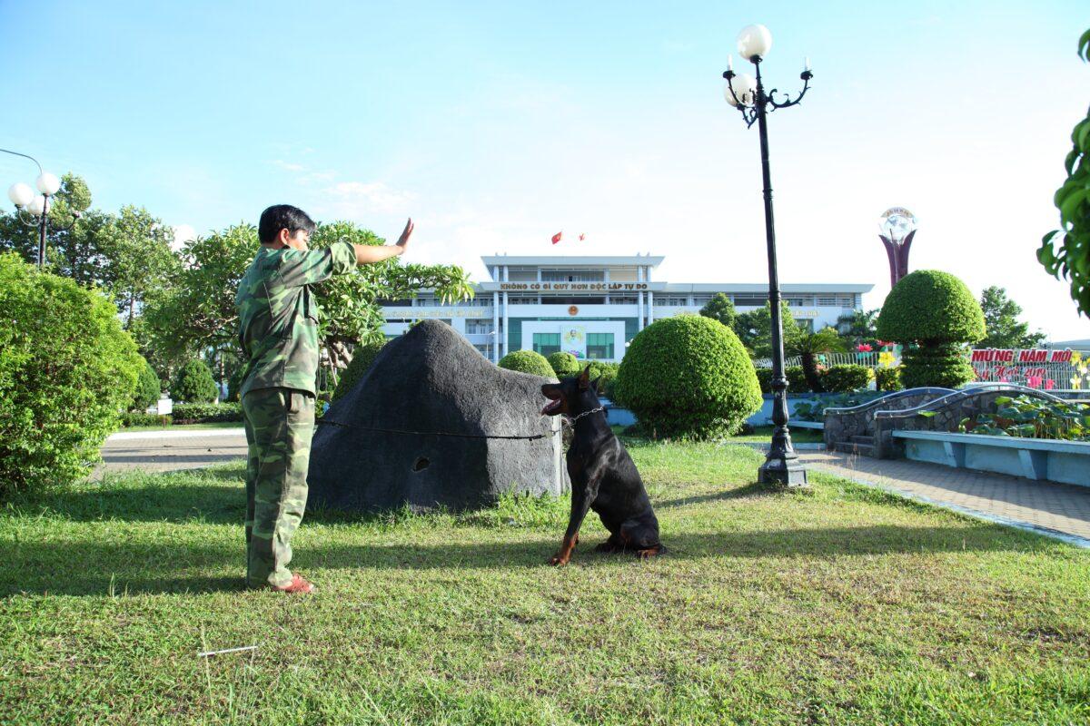 huấn luyện chó theo yêu cầu