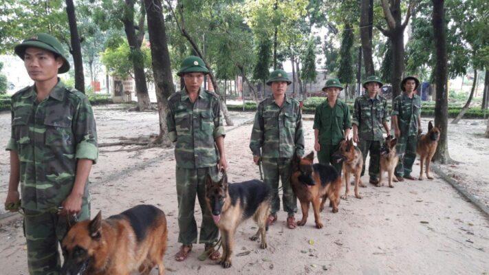 Kinh nghiệm chọn trường huấn luyện chó quận 5 uy tín và chất lượng
