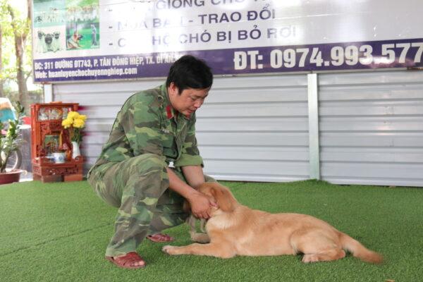 Kinh nghiệm chọn trường huấn luyện chó quận 6 uy tín và chất lượng