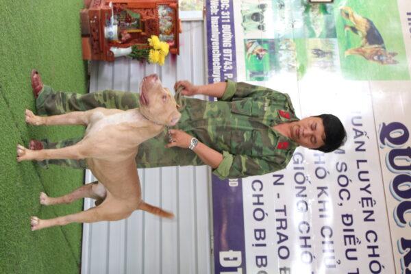 Kinh nghiệm chọn trường huấn luyện chó quận 7 uy tín và chất lượng