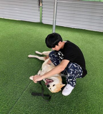 Lưu ý quan trọng khi chọn trường huấn luyện chó quận Tân Phú uy tín