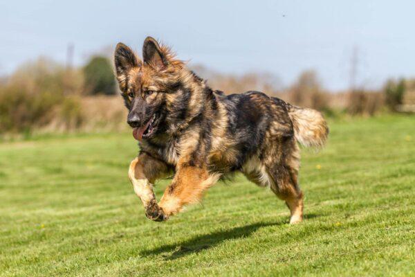 Mẹo để chọn được trường huấn luyện chó huyện Nhà Bè uy tín