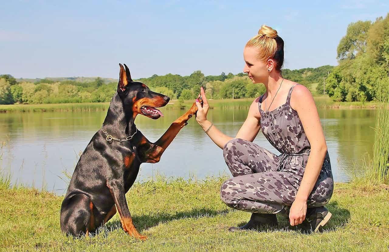 7 nguyên tắc vàng khi huấn luyện chó mà bạn phải nằm lòng