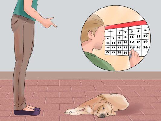 Cách dạy chó giả chết cực kỳ đơn giản tại nhà