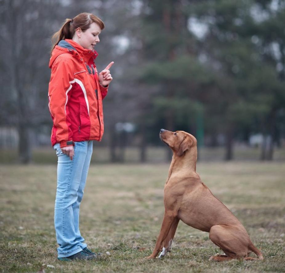 Cách dạy chó nghe lời tại nhà với thủ thuật đơn giản